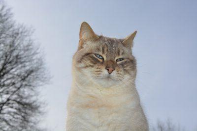 cat-3163632_1920